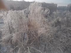 ледяные деревья)