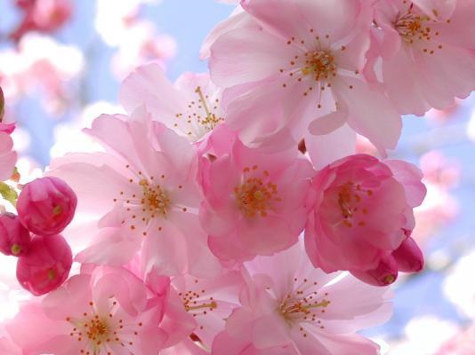 post-3933-0-58290700-1369198511_thumb.jp